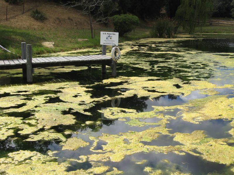 Lucky Lake #2